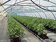 Low technology greenhouse