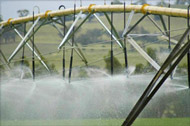 Irrigation spray