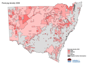 Distribution Map 2009 Feral Pig Occurences 2009