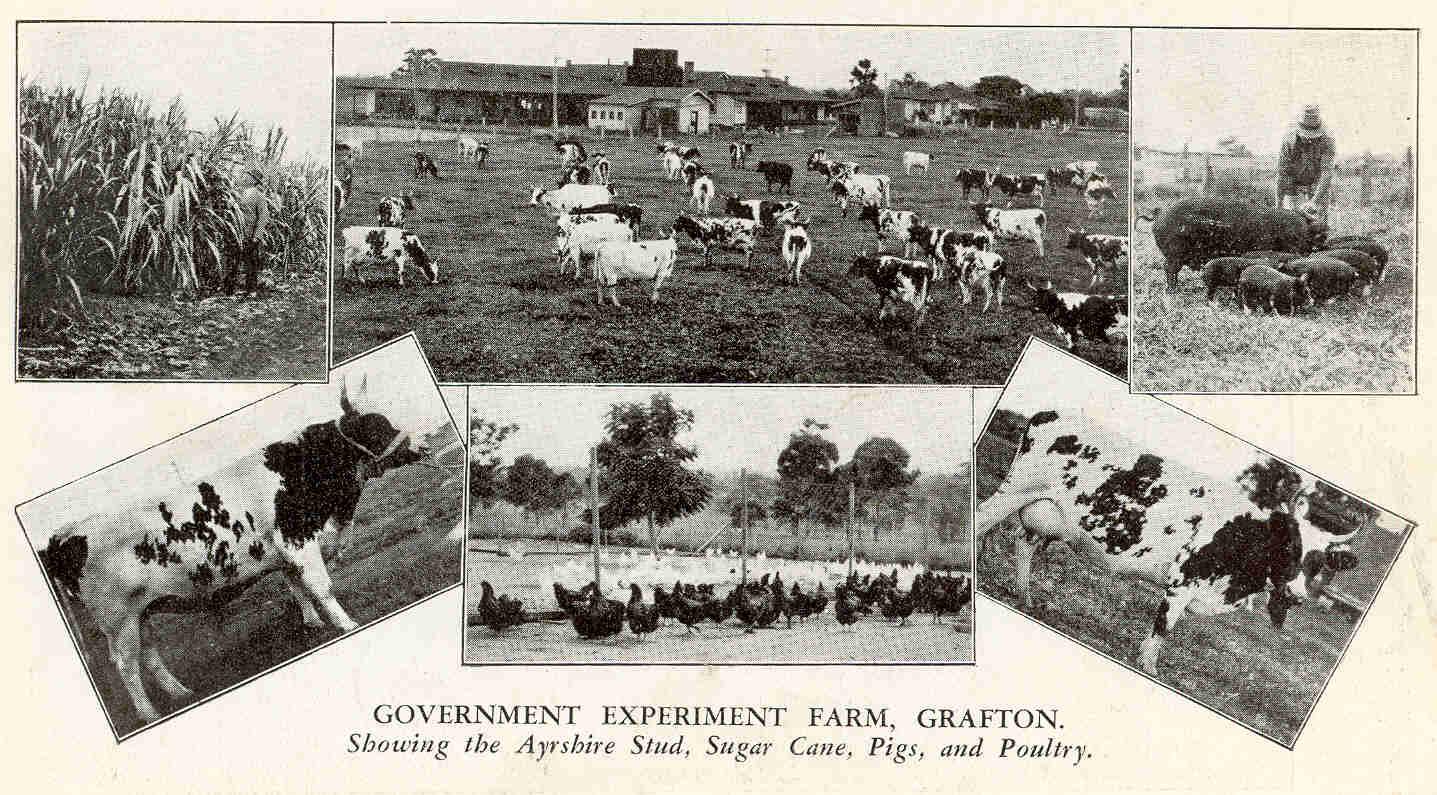 Grafton Experiment Farm 1931