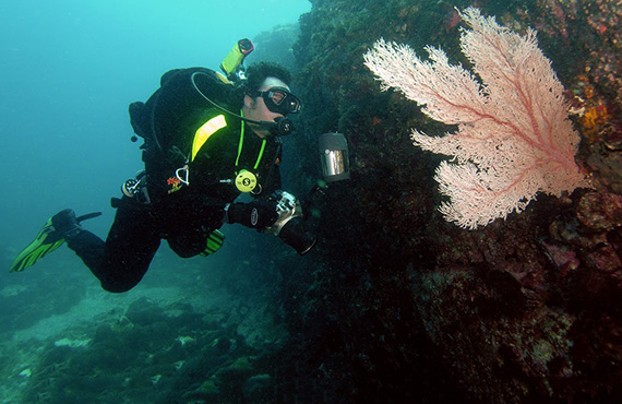 Diver looking at sea fan, Photo: David Harasti