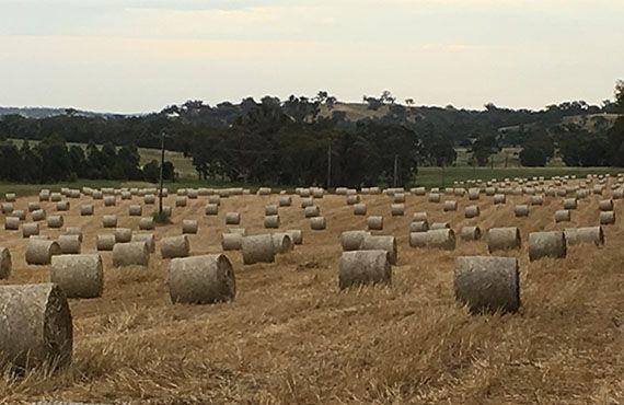 Photo of multiple hay bales (photo: Mel Case)