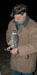 Forestry Corporation principal research scientist Dr Rod Kavanagh with a captured barking owl