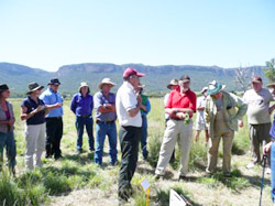 Blue heliotrope biological control field day