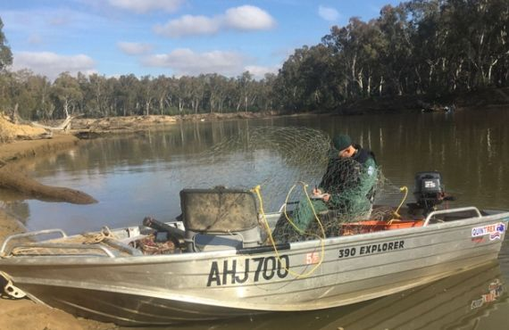 Fish trap seized from Murray River