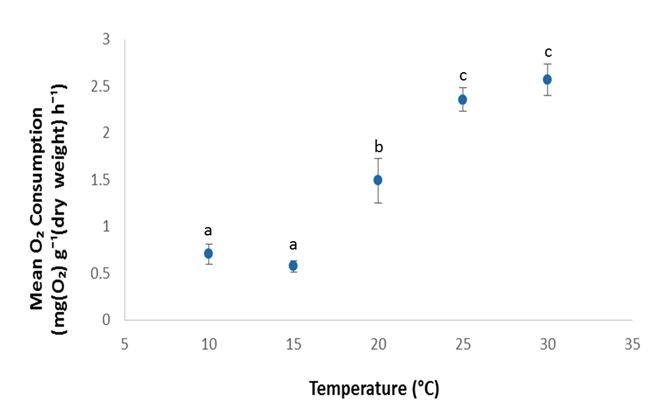 Mean rate of oxygen consumption (N= 6, ± S.E.) of juvenile prawns held in six different water temperatures