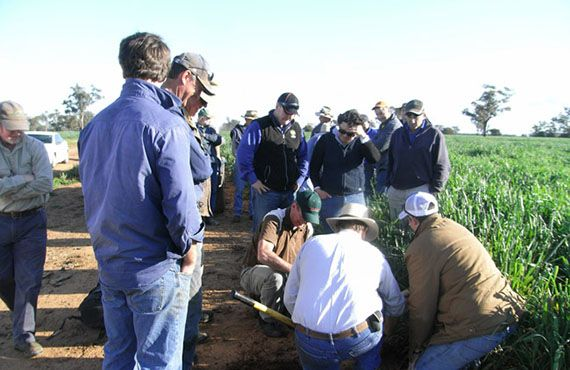 Landholders examining locust eggbeds near Trangie (Sep. 2010, photo from Central West LHPA)