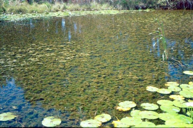 Backyard aquaponics view topic fish farm with what for Aquaponics aeration