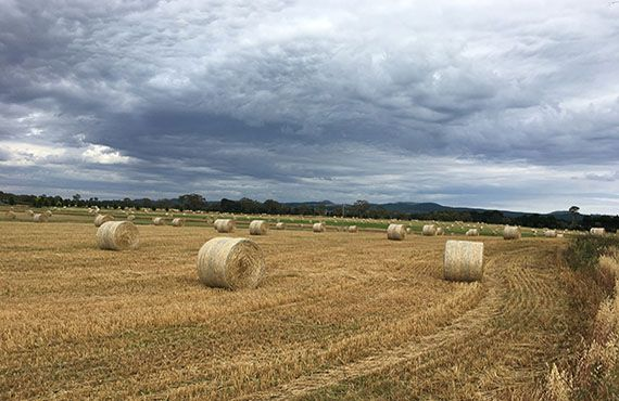 Photo of round bales in paddock (Photo: Mel Case)