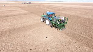 Sowing NSW DPI canola trial at Narrabri
