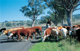 horse and cattle