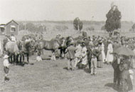 Inspecting the horses on Farm Day, December 1921