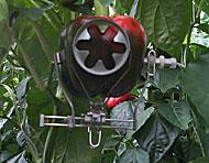 Sensor on plant
