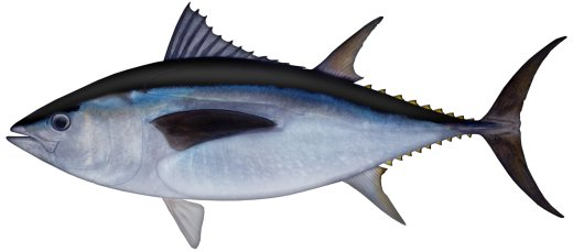 Amazoncom  Wild Planet Wild Albacore Tuna No Salt