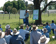 Field day for cattle producers
