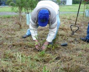 Tree planting Forum