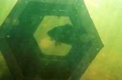 Murray cod breeding chamber