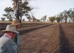 A dry paddock prior to wetland rehabilitation