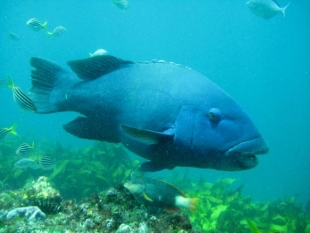 Bronte-Coogee Aquatic Reserve