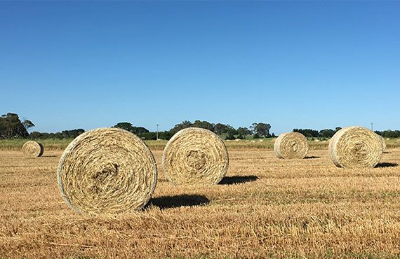 Photo of 5 round bales in paddock with blue sky (Photo: Mel Case)