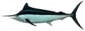 Marlin (Black)