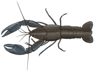 Yabby