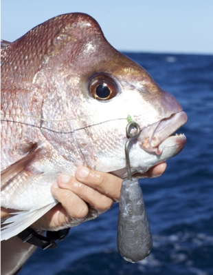 Snapper with weight release