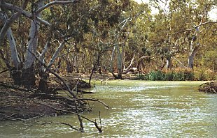 An inland river with intact riparian vegetation