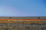 Rangelands provide for economic production and biodiversity conservation