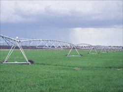 Photo of an overhead irrigation system