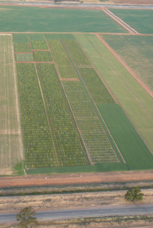Aerial view of irrigated cereal trial, Yanco.