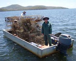 Illegal crab traps seized