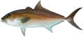 Samonfish