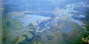 Aerial view of Cumbung Swamp