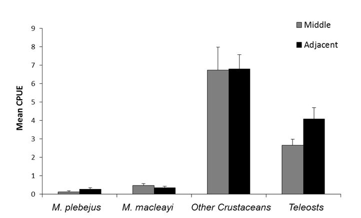 Mean CPUE (± S.E.) of cast net samples from the middle and adjacent habitat of sub-tidal creeks within the Hunter River Estuary