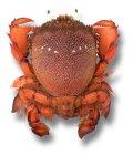 Crab (spanner)