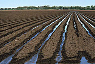 Soil and irrigation water