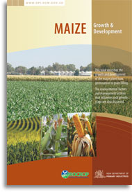 Maize growth and development 