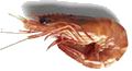 Prawn (Black Tiger)