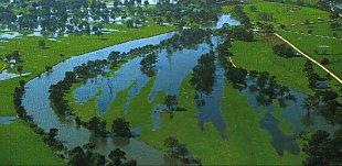 A typical floodplain swamp when flooded