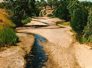 Native fish are adapted to survive periodic drying of habitat. Lachlan River 2001.