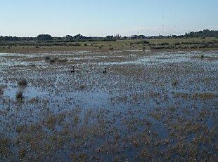 Hexham swamp, an example of a saltmarsh