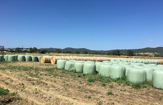 Photo of round silage and hay bales with blue sky (Photo: Mel Case)