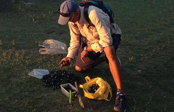 Fisheries Officer counting seized shellfish on grass