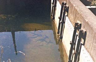 Figure 1. Floodgates act as barriers to fish and can restrict their access to upstream habitat areas