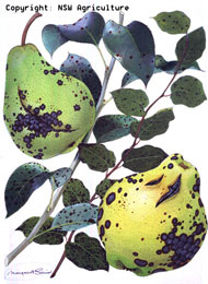 Fleck disease pome fruit