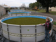 Salvinia biocontrol ponds