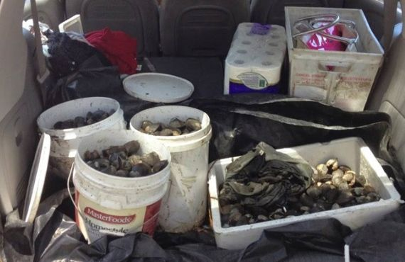 Cockles seized from Lake Macquarie