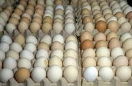 Eggs in cartons