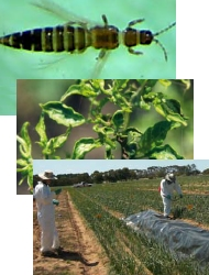 Diseases pests & guides